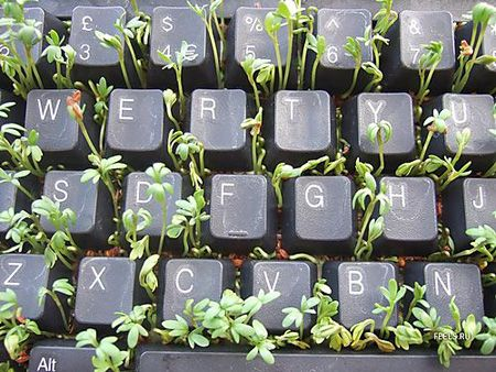 keyboard flowerpot