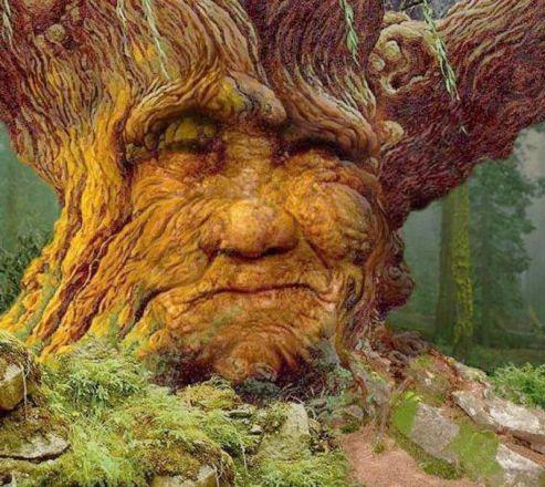 moss woman