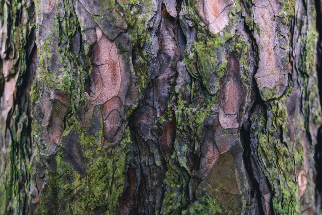 mossy-tree-bark-texture